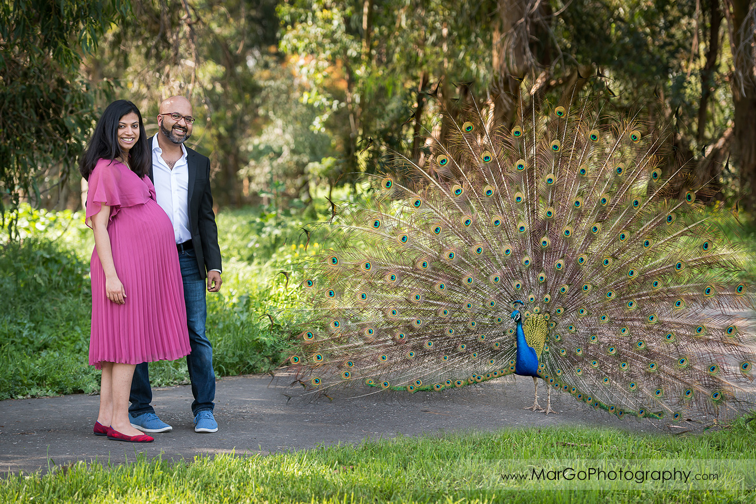 man in dark jacket and pregnant woman in pink dress standing next to peacock in Ardenwood Historic Farm