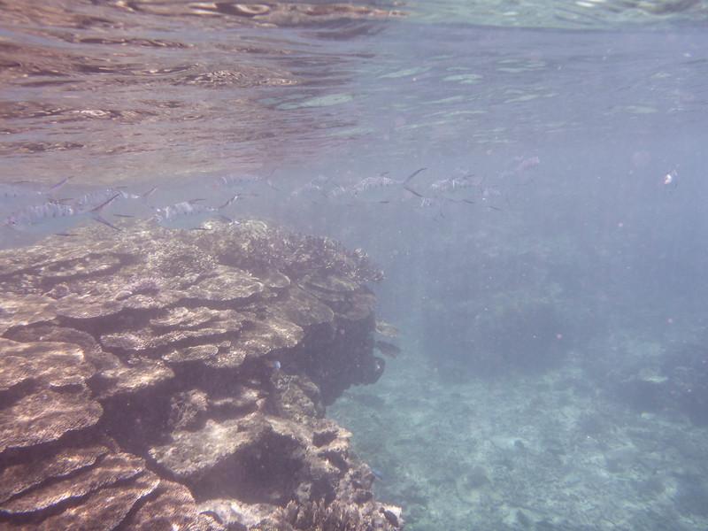 09. Lady Elliott Island-0189.jpg