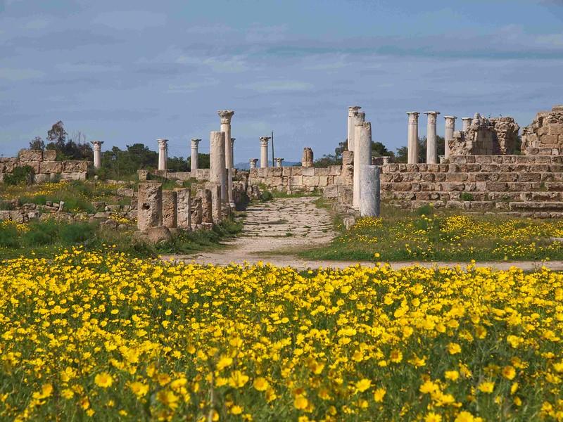 Salamis NC 16-03-12 (47).jpg