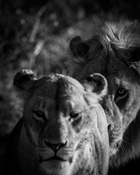 Botswana_June_2017 (5010 of 6179).jpg