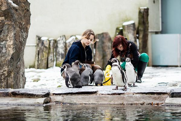 Zoo zima