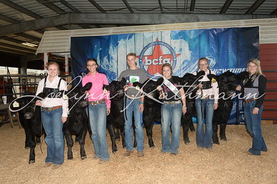 Junior Heifer Show Backdrops