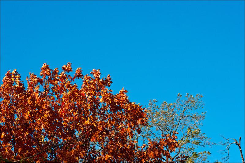 20111112_Autumn_03.jpg