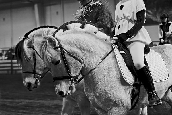 HORSE FAIR FJORD DEMO 2014