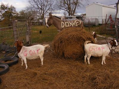 Goats 2011