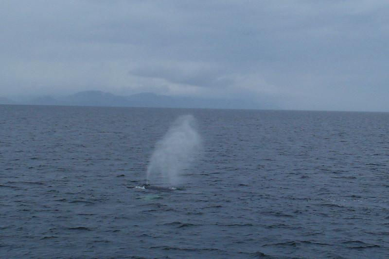 Whale's Fluke.jpg