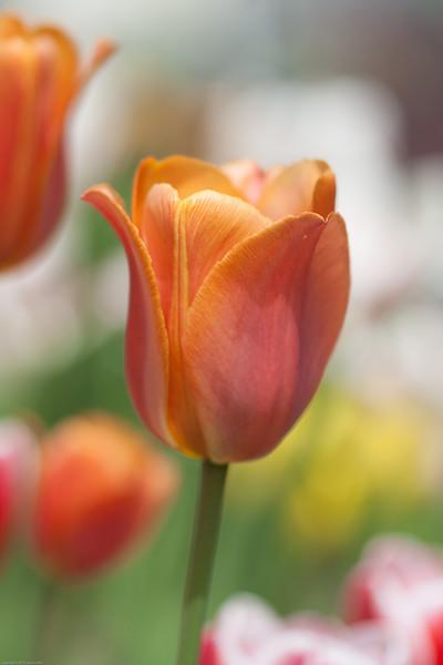 flowers-0452.jpg