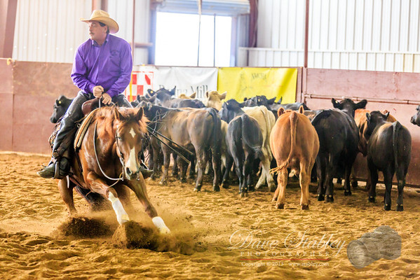 Cutting Horse Competition