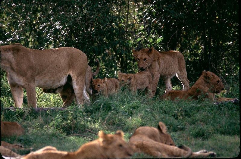 Kenya2_045.jpg