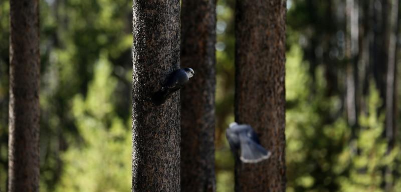 Watching birds at Graham's nap stop