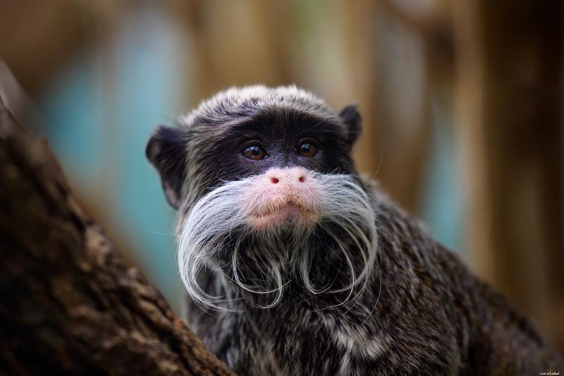 Beardy guy