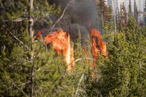 The Nethker Fire
