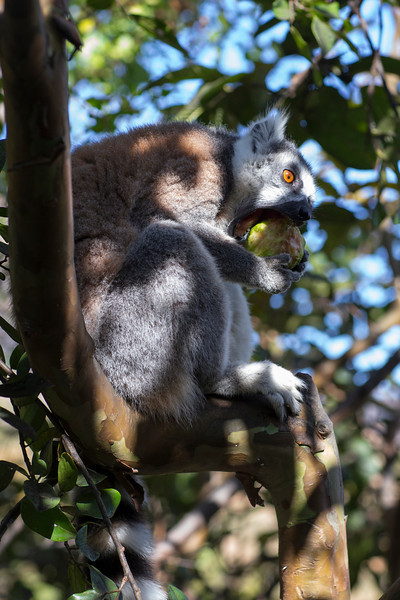 Madagascar_2013_FH0T1546.jpg