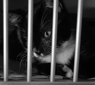 2007 Kitten Needs A Home Call CVA 516-825-3066