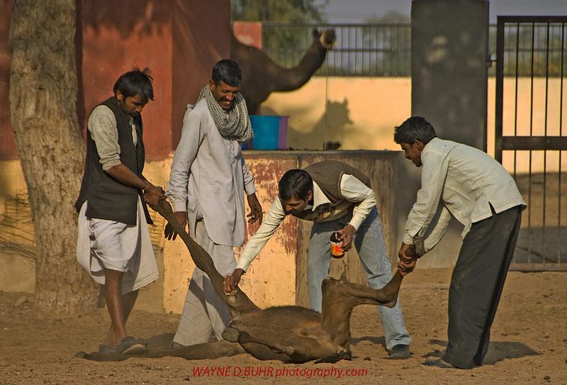 INDIA2010-0206A-357A.jpg