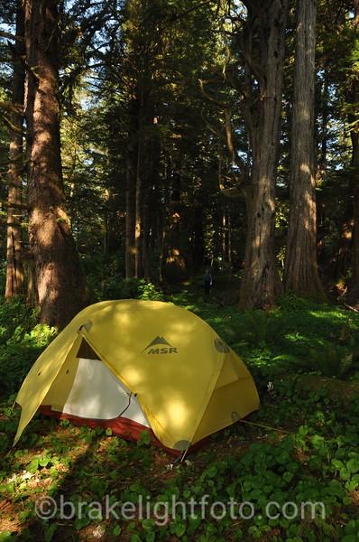 Campsite in Higgins Passage