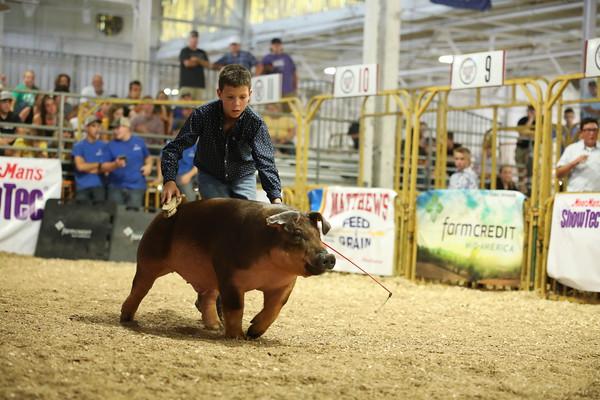 Duroc - Champion Duroc