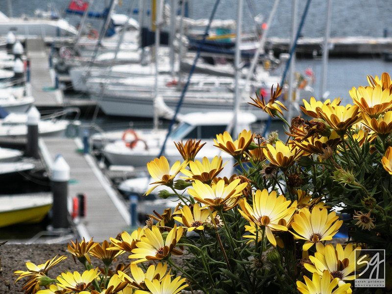 Azores-Charleston-sc-photographer (2).jpg