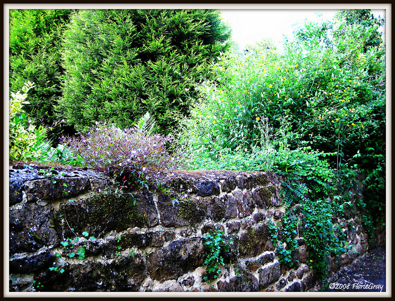 Summer's Bounty Overflowing, Wroxton  ©2008 FlorieGray
