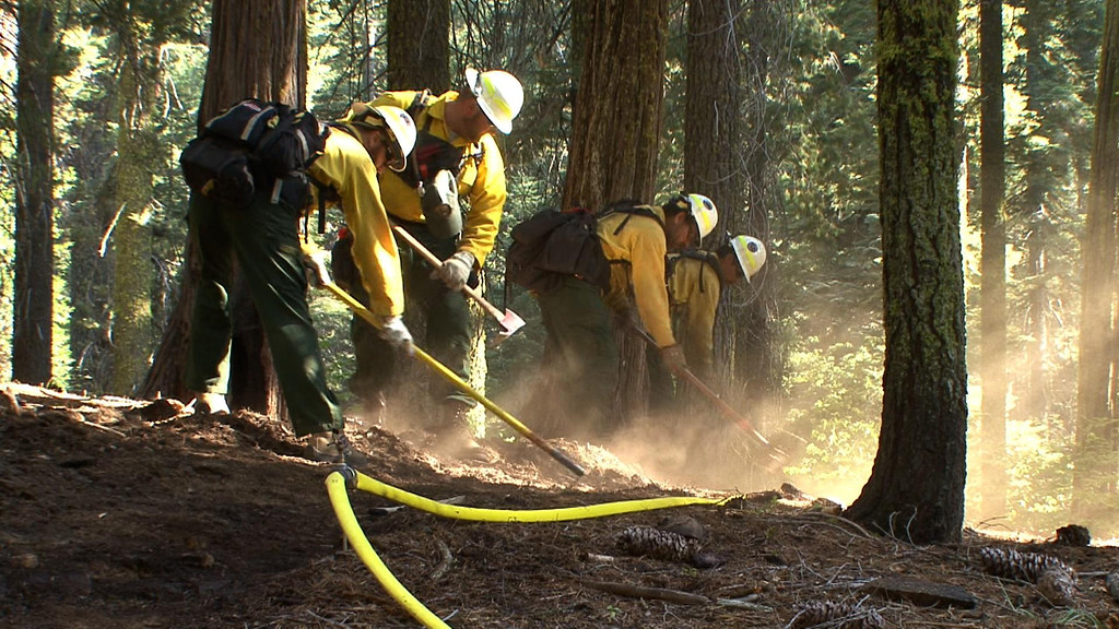 . This photo obtained August 26, 2013 courtesy of the US Forest Service, shows NPS crews as they dig hand line along a sprinkler hose as part of a multi-pronged approach to protecting the Giant Sequoias against the Rim fire. A wildfire raging on the northern tip of California\'s Yosemite National Park threatens a world-famous site of natural beauty and the reservoir that provides San Francisco with drinking water. AFP PHOTO / US FOREST SERVICE ==HO/AFP/Getty Images