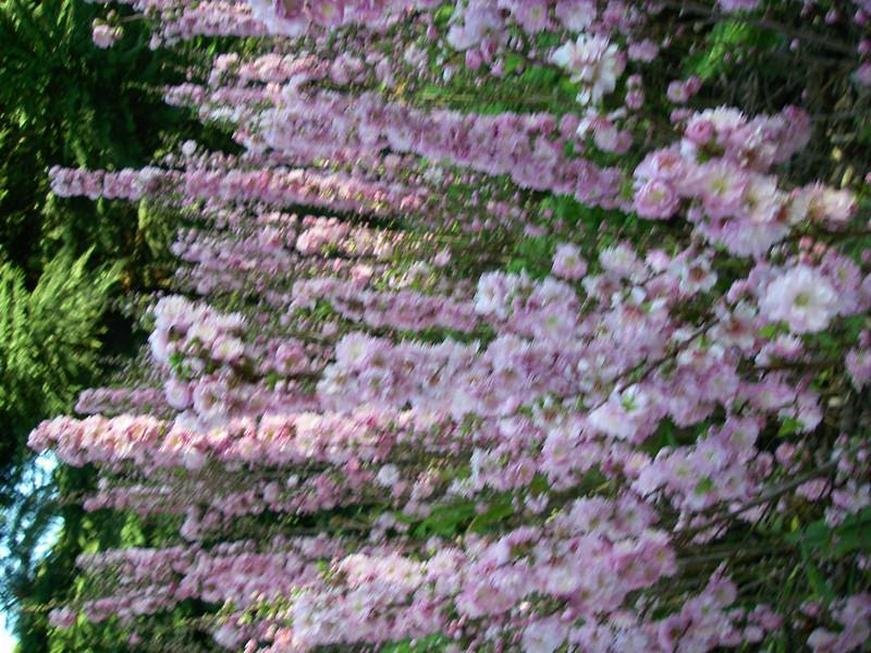 Trip,family,botanic gardens 079.JPG