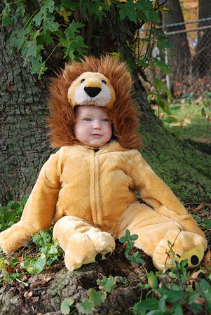 Brooke the Lion