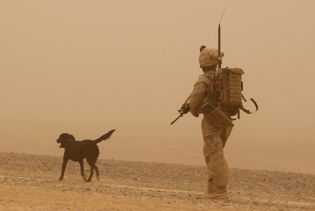 """. A U.S. marine from 1st Light Armored Reconnaissance Battalion, Jump Platoon walks with sniffer dog \""""Conn\"""" while on patrol near a sandstorm in a desert in Helmand, Afghanistan September 13, 2010.    REUTERS/Erik de Castro"""