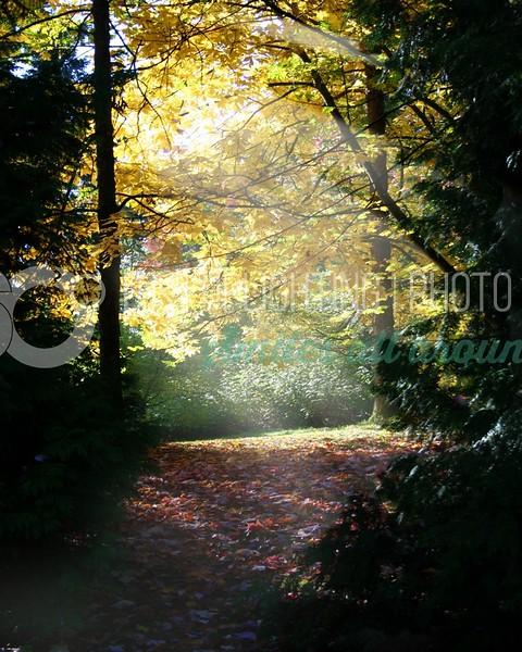 Nook in the Woods_batch_batch.jpg