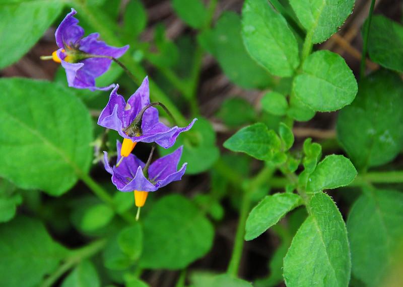 NEA_3023-7x5-Flower-adj.jpg