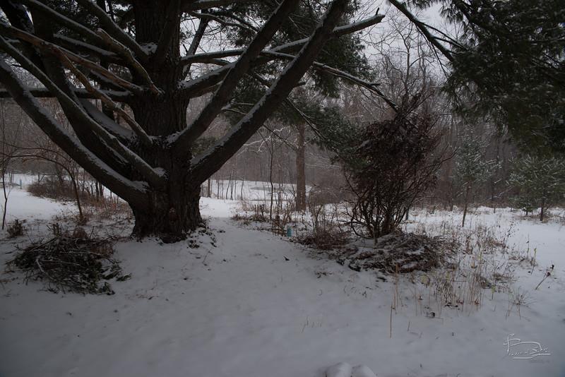 20150228 snowing walkabout_003_07516.jpg