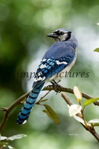 Birds  (68)