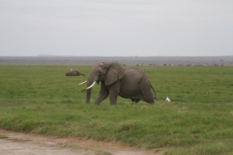 Kenya 2019 #2 1563.JPG
