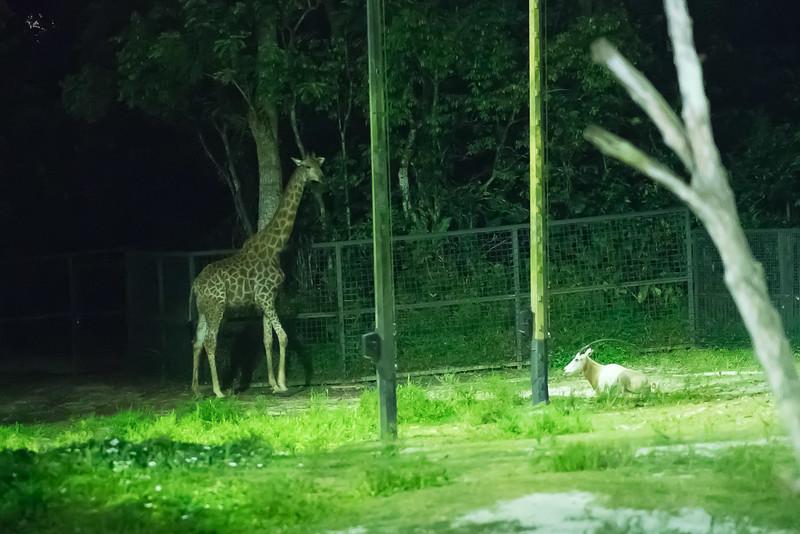 Night-Safari-9809.jpg