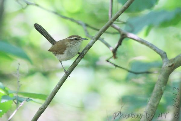 Birding 2013 June