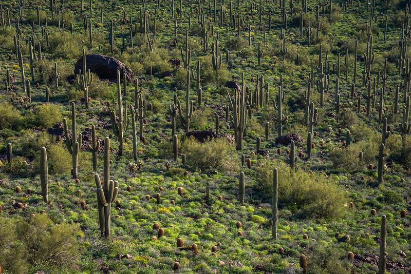 green grove 2.jpg