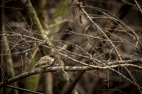 Nature walk with Kate 2-5-17