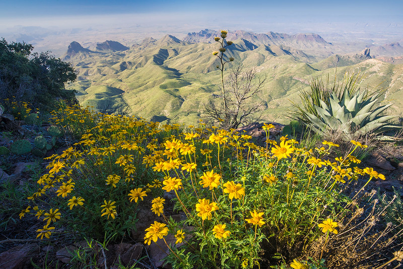 Big_Bend_National_Park_South_Rim_View_Wildflowers_DSC2117.jpg