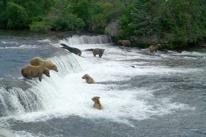 Alaska National Parks Katmai