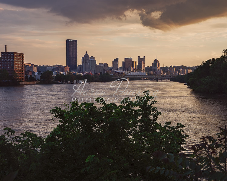 Pitt-19-0517-19-17p.jpg