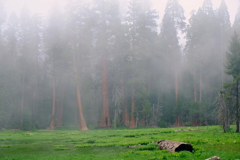 California Day 6 Sequoia 05-30-2017 99.JPG
