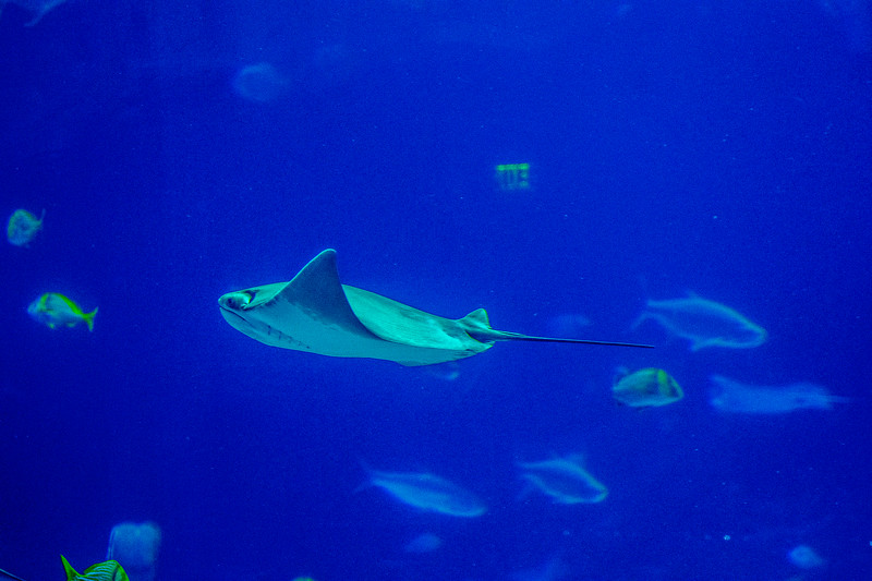 GA Aquarium with Linc, Ali & Abe-70.jpg