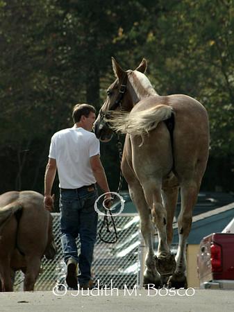 Berlin Fair Pulling Horses 2007
