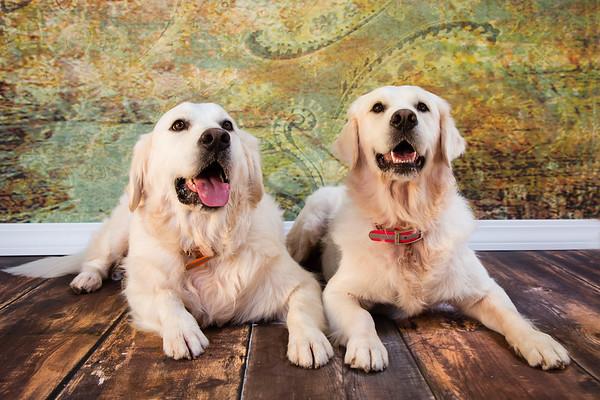 Tuxedo Bark Club-Boris & Natasha