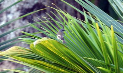 Best of Birds of Belize