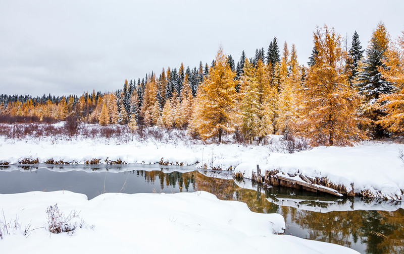 Early autumn snow in Prince Albert National Park, October 2016