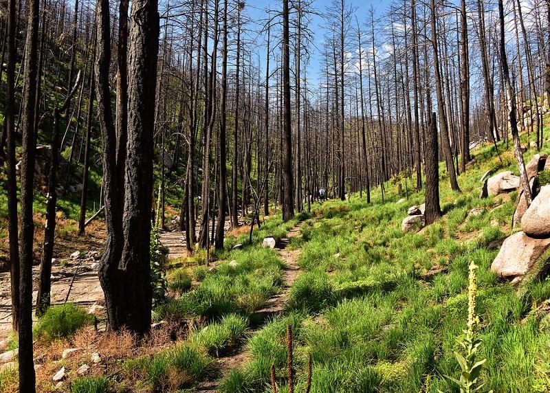 NEA_0153-7x5-Mills Canyon Trail.jpg