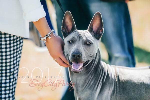 DogCityParty 17/06/2017