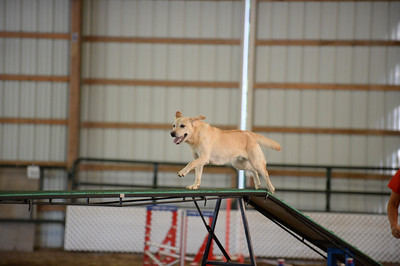 Flexible Flyers CPE Agility Trial August 21-23