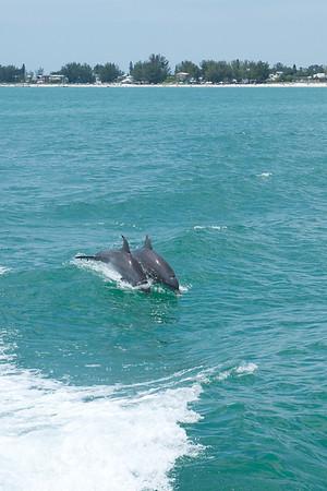 Cruising the Gulf 2012