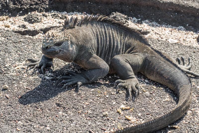 Galapagos-Best-049.jpg
